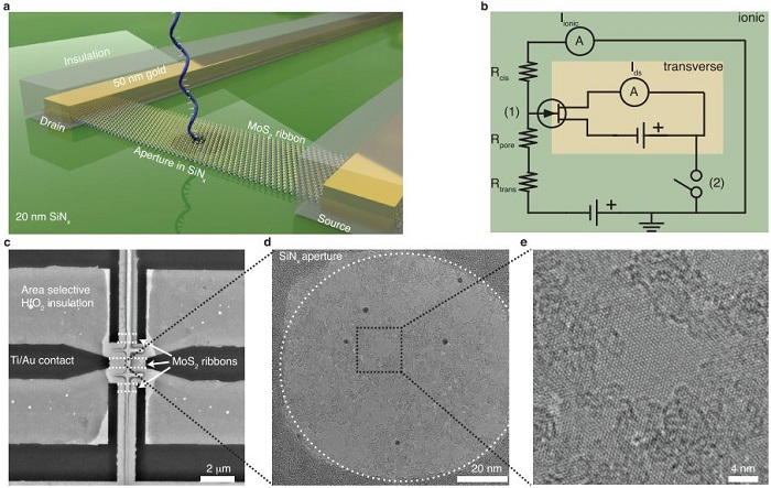 Figure: Device overview. (a) A schematic of the proposed FET-nanopore device. Metal leads contact the monolayer MoS2 crystal, which is subsequently etched into a ribbon. Area selective insulation around the electrodes avoids cross-talk and insulates the metal from the electrolyte while keeping the ribbon exposed to the liquid. An aperture in the SiNx membrane provides a part where the MoS2 is freestanding. Finally, a nanopore can then be drilled through the freestanding part using a TEM. The translocating DNA will then simultaneously modulate the ionic current as well as the transverse current. (b) The equivalent electrical circuit describing the two subcircuits, denoted here as ionic and transverse. The MoS2 ribbon is represented by a transistor at the vicinity of the nanopore (1). The switch symbol (2) denotes an optional decoupling of the two grounds. (c) A TEM image of a finished device. Three ribbons are placed on the SiNx membrane. The middle ribbon contains a suspended part. (d) The suspended part of the middle ribbon. Crystalline monolayer MoS2 is visible, surrounded by patches of PMMA residues. (e) Clean parts of freestanding MoS2 can be obtained even after multiple fabrication steps.